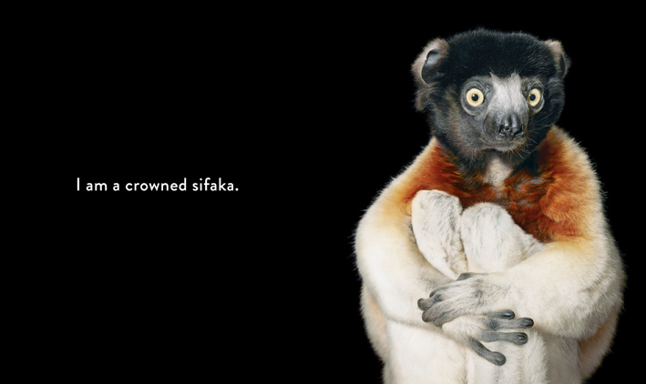 Who am I? A Peek-Through-Pages Book of Endangered Animals by Tim Flach